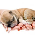 ペット保険(犬保険・猫保険)はどんな補償があるの?手術費用もでるペット保険の補償内容とは