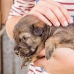 ペット保険(犬・猫保険)に付帯されている賠償責任特約には気をつけて!